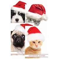 Christmas Paws Greeting Cards (Box of 12)