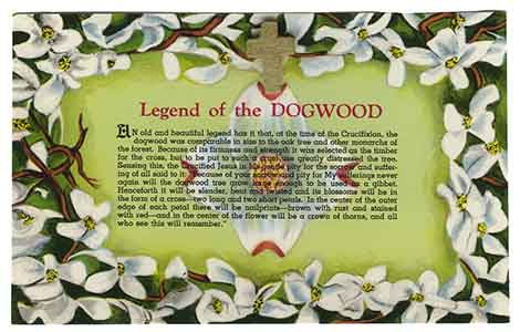 Dogwood Flower Cross Post Card